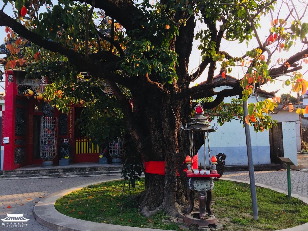 杜府千歲茄苳樹